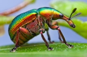 What makes a insect a insect
