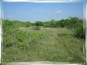good quality land