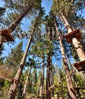 Treetops Adventure Course