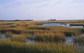 Salt Marsh Photo 2