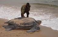 Largest turtle in the world