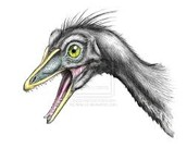 Archaeopteryx's head
