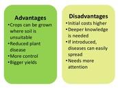 3 Advantages of using hydroponics