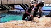 This shows a trainer with a broken arm who was pulled in by Orkid a whale at sea world