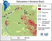 Rain forest near Rio taken out for urbanization
