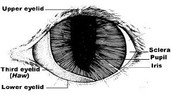 Cat Eye Syndrome Names