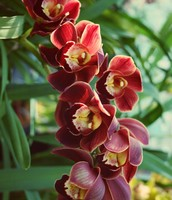 """""""wide-mouthed orchids smile"""""""