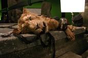 aslan dead on the table