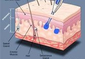 Effects on Each Layer of Skin