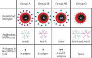 What makes blood types different?