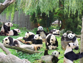 You can visit the panda exhibit!