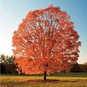 Symbol 1: Trees