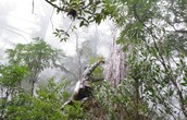 http://www.nature.com/news/global-count-reaches-3-trillion-trees-1.18287