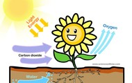an example ofphotosynthesis