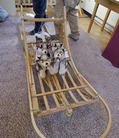 Junior iditarod sled they use in racing