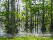 Swamp Description