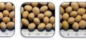 Choose Your Soybean Variety and Supplier