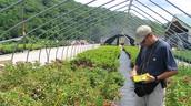 Agricultural Pest Survey
