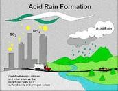 Acid Rain Picture