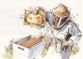 Back to Basics: Beekeeping 101