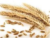 "Be a ""whole grain-rich"" grain product"