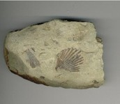 Sandstone with fossils in it.