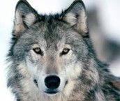 Wolf News1; Scary Good Stories