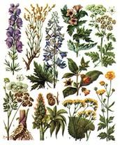 Ядовитые растения Карелии.