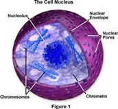 The Parts of an Animal Cell