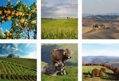 """Nacrt pravilnika o provedbi mjere 09 """" Uspostava proizvođačkih grupa i organizacija """", iz Programa ruralnog razvoja Republike Hrvatske za razdoblje 2014.-2020."""