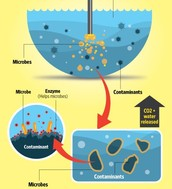 Pros and Cons of Bioremediation in the Water