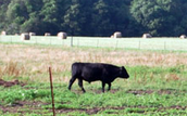 Plenty of farm land in New World