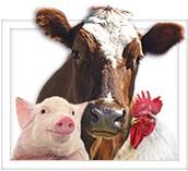 comment des animaux et nature aident des humans