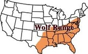 Red Wolves Habitat location (Paragraph 3)