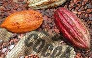 Fairtrade Organic Chocolate