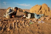 Who Studies Fossils and Fossilization?