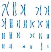 Genetic Link