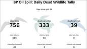 animals killed do to oil spills