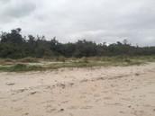 McCrae Sand Dunes
