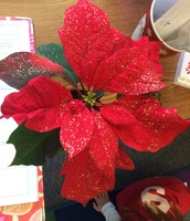 Our classroom poinsettia.