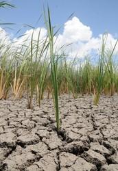 Does drought affect League city?