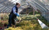 A Nursery Worker Watering Plants