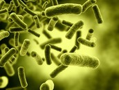 partes de las celulas procariotas monera