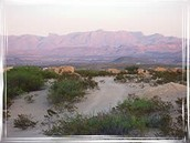 What is there to see at Trans Pecos & Chihuahuan Desert
