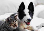 Pet Friendly Community