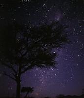 Constellation- Ara