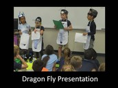 Dragon Fly Presentation