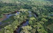 Bolivian Rain Forest