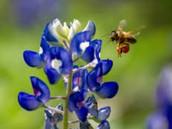Buzzy as a bee