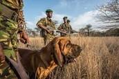 Rhino Poaching Conservation Rangers